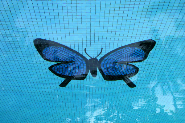 600 X 400 swimming pool butterfly